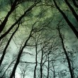 Twilight in forest, mystic nightscape — Stock Photo #29633795