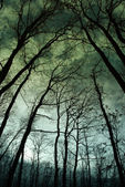 Twilight in the forest, mystic nightscape — Stock Photo