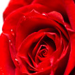 Close-up shot of a red rose bud with water drops on petals — Stock Photo