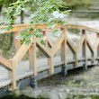 Wood bridge in forest — Stock Photo
