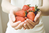 Fresh picked strawberries held over strawberry plants — Stock Photo
