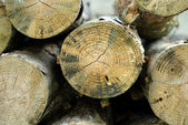 Tree stumps for background use — Stockfoto