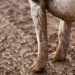 Foto Stock: Dirty dog