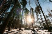 Zachód słońca w lesie zimą — Zdjęcie stockowe