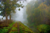 Foggy morning, misty trail — Stockfoto