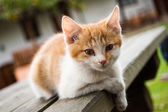 Adorable meowing tabby kitten outdoors — Stock Photo