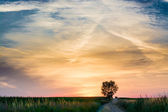 Magical sunrise with tree — Stock fotografie