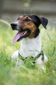 Dog attention — Stockfoto