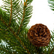 Pine branches with pine cones on white — Foto de Stock