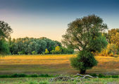 Wooded river landscape in Hungary — Stock Photo