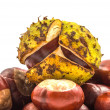 Horse chestnut — Stock Photo