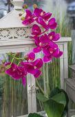 Composizione orchidea — Foto Stock