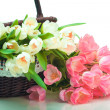 Beautiful tulips in basket — Stock Photo
