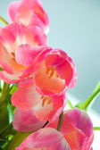 Beautiful pink tulips — Stock Photo