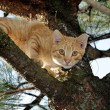 Stock Photo: Cat in tree