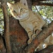 Cat in a tree — Stock Photo
