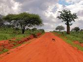 Tsavo East National Park — Stock Photo