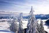 Sunny mountain landscape — Stockfoto