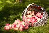 Basket of apples — Stock Photo