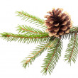 Christmas decoration - fir branch with gilded cone — Stock Photo #30270111