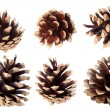 Gilded pine cone - Christmas decoration — Stock Photo