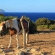 Horse on background of sea — Stock Photo #30717137