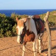 Horse on background of sea — Stock Photo #30721101