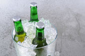 Three Beer Bottles in Ice Bucket — Stock Photo