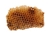 Honeycomb Section on White — Stock Photo