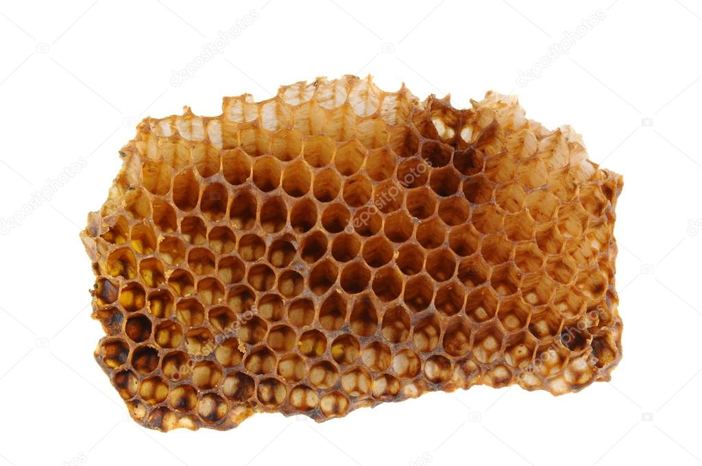 Closeup of a section of Honeycomb isolated on a white background. — Stok fotoğraf #17446277