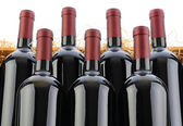Cabernet sauvignon Wine Bottles in Crate with Straw — Stock Photo