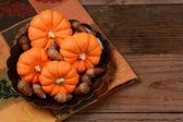 Mini Pumpkin Still life — Stock Photo