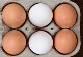 Brown and White Eggs in 6 Pack Carton — Stock Photo