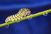 Caterpillar on a blue background — Stock Photo