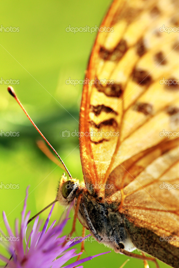 A butterfly on the flower — Stock Photo #13246208