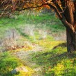 Autumn meadow with big tree — Stock Photo