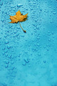 Yellow leaf and drops on the blue waterproof material — Stock Photo