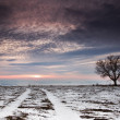 Winter tree in a field with dramatic sky — Foto Stock