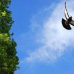 Flying bird In The Sky — Stock Photo #2078115