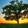 Sunset Tree - Stockfoto