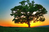 Sunset Tree — Stock Photo