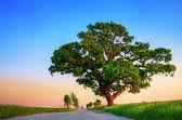 закат дерево — Стоковое фото