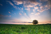 Spring meadow with big tree — Stock Photo