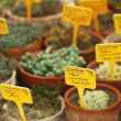 Potted Cactus Plants — 图库照片