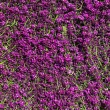 Flower garden , defocused — Photo