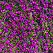 Flower garden , defocused — Stock Photo