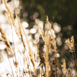 Stock Photo: Cobweb spread between grasses