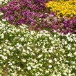 Stock Photo: Flower garden