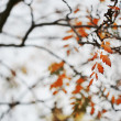 Autumn branches — Foto de Stock