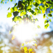 Sun Shining Through Forest Trees — Stockfoto